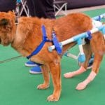 Understanding The Dog Quality Of Life Scale