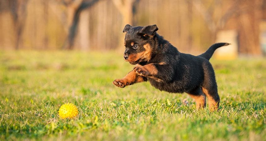 Verwonderlijk Cesar's TODAY Top Ten Puppy Tips | Cesar's Way DQ-37