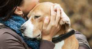 Dog Nutrition: A To Z | Everything About Dogs and Food | Cesar's Way