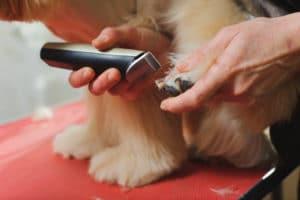 Importance des tondeuses pour chiens
