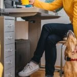 Making Your Workplace Dog Friendly