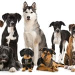 What's In A Breed?