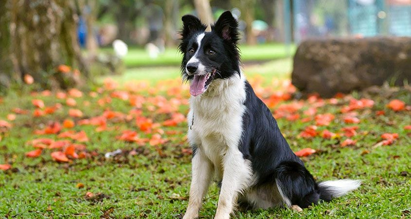 Collies   Ten Things You Didn't Know About Border Collies ...