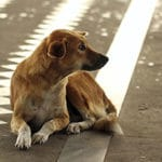 Lost! What To Do If Your Dog Goes Missing