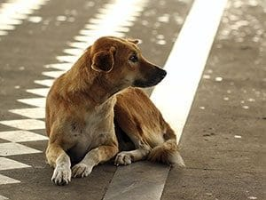 lost dog laying in street