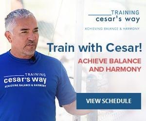 Train With Cesar