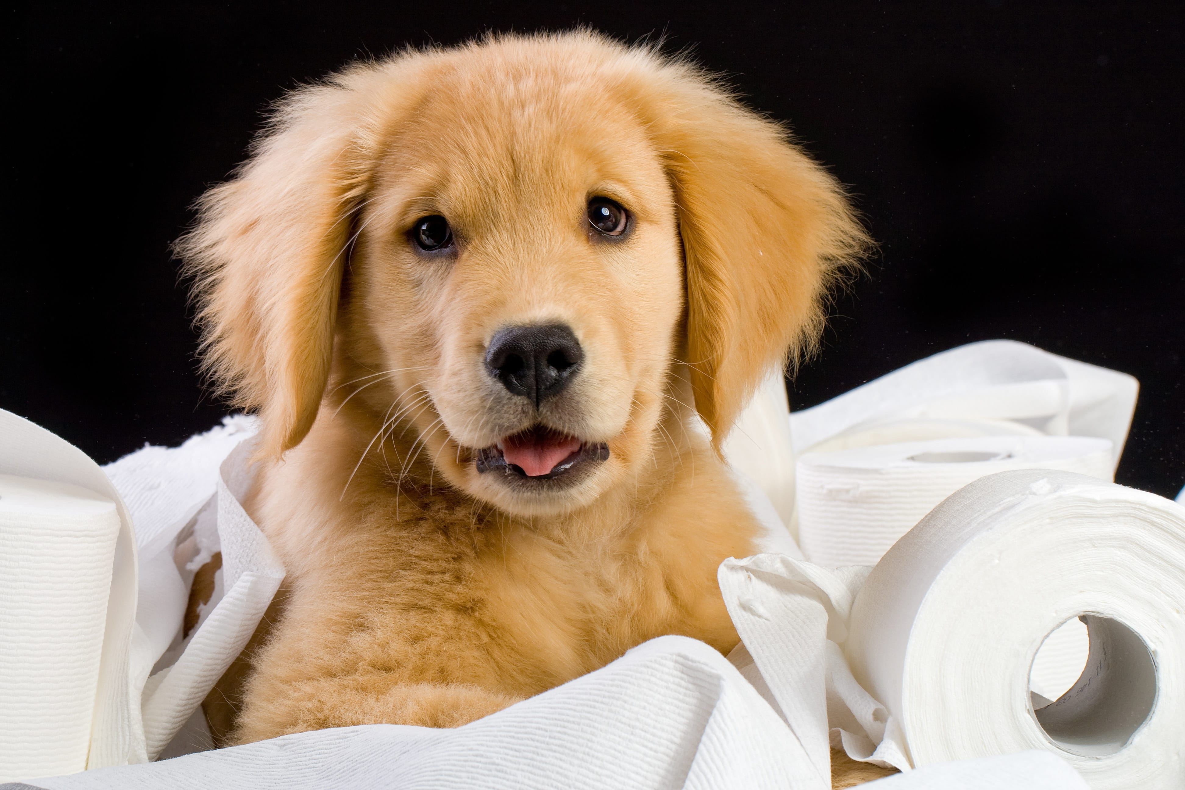 How To Potty Train A Puppy The Right Way Cesar S Way