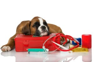 Why Dogs Shake, Tremble or Shiver | Cesar's Way