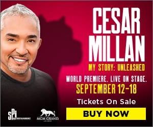 19-SPI-01370-Cesar-Millan-Website-Banners_300x250_OnSale