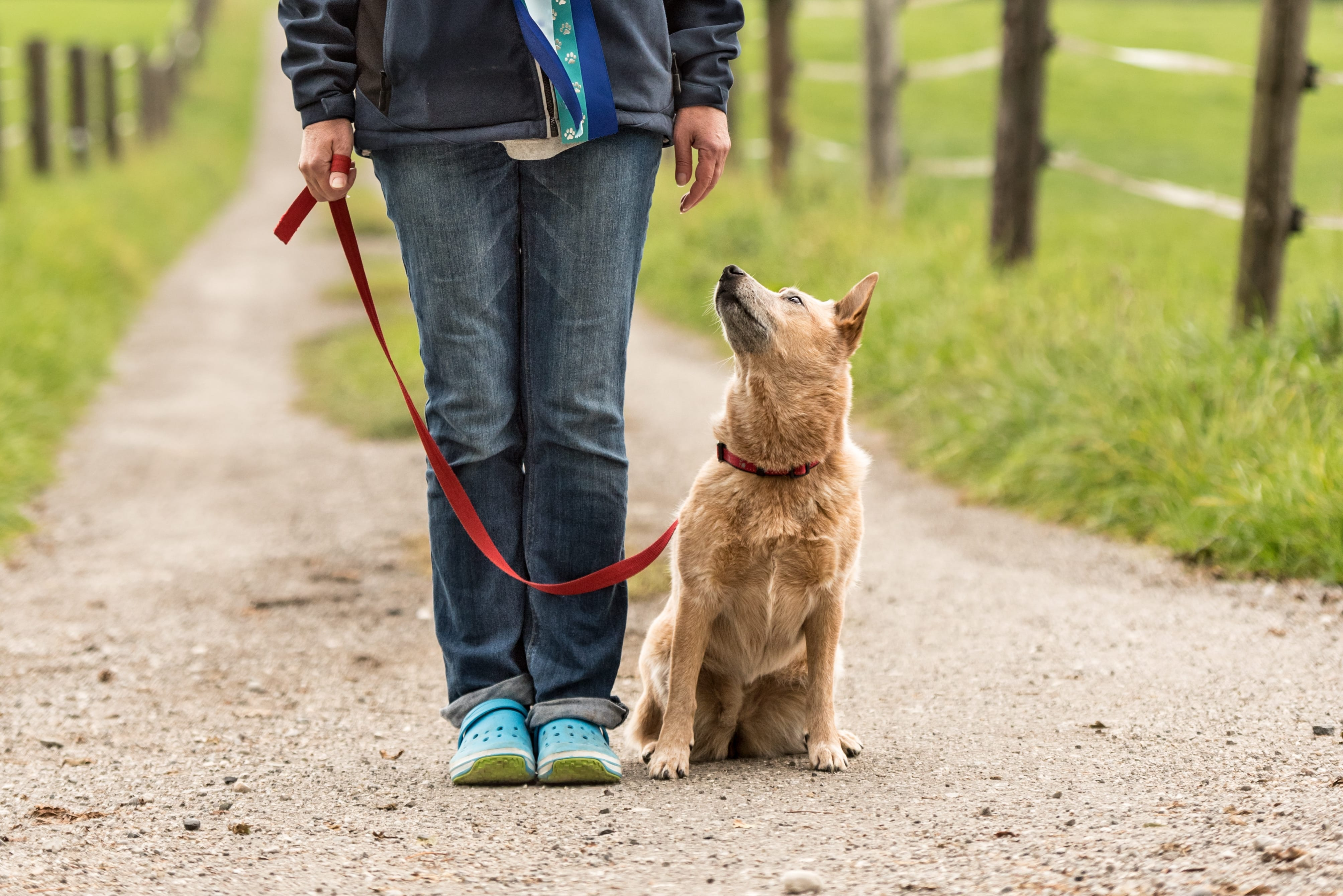 You Can Teach Your Dog To Obey Your Commands