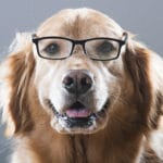 What Your Dog Knows About You