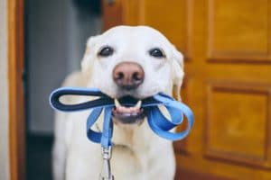 6 Steps To Teaching Your Dog To Fetch   Cesar's Way