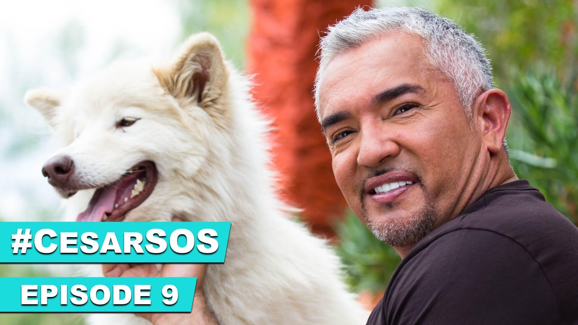 #CesarSOS Episode 9