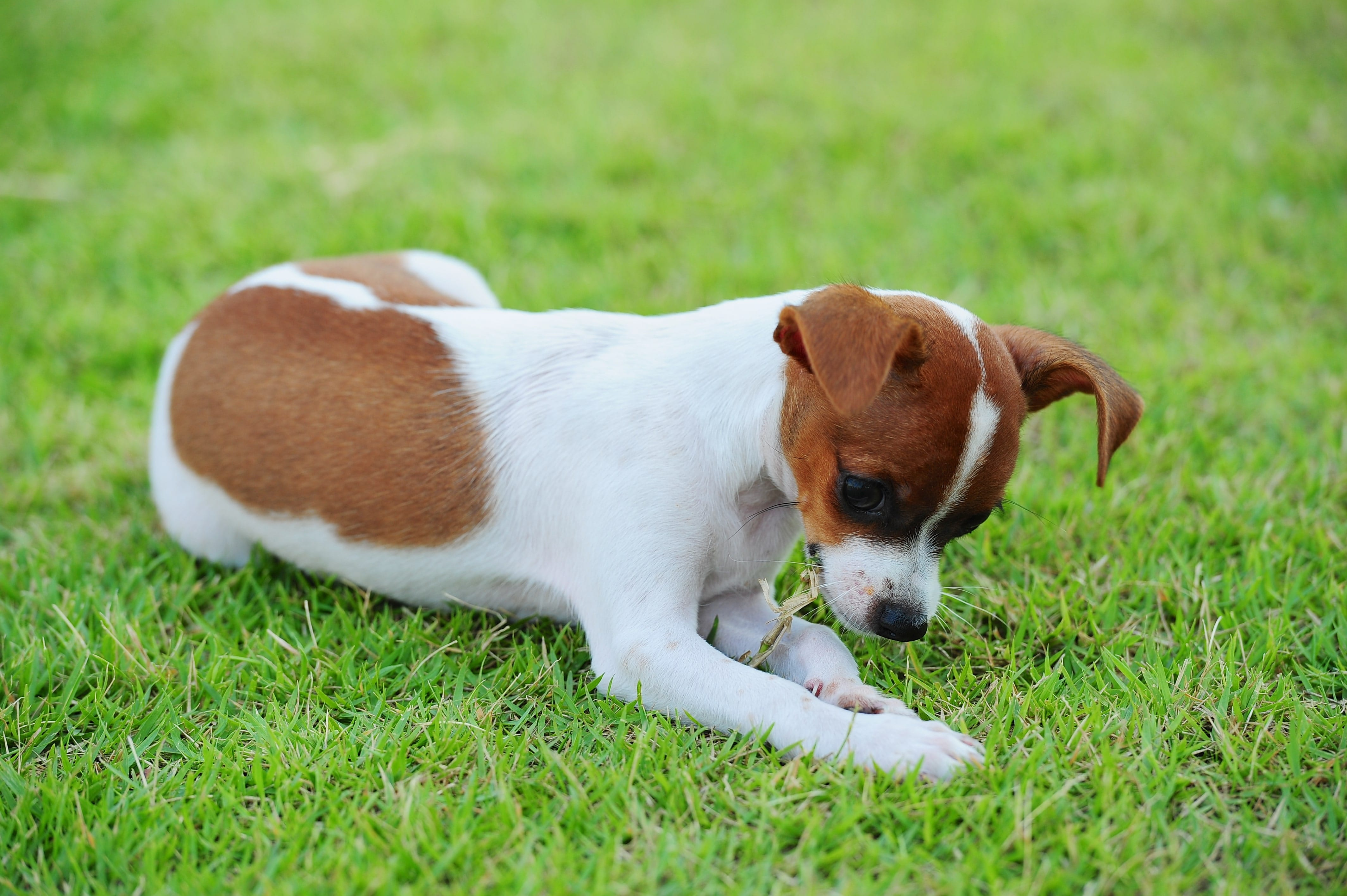 Why Dogs Eat Grass — And How To