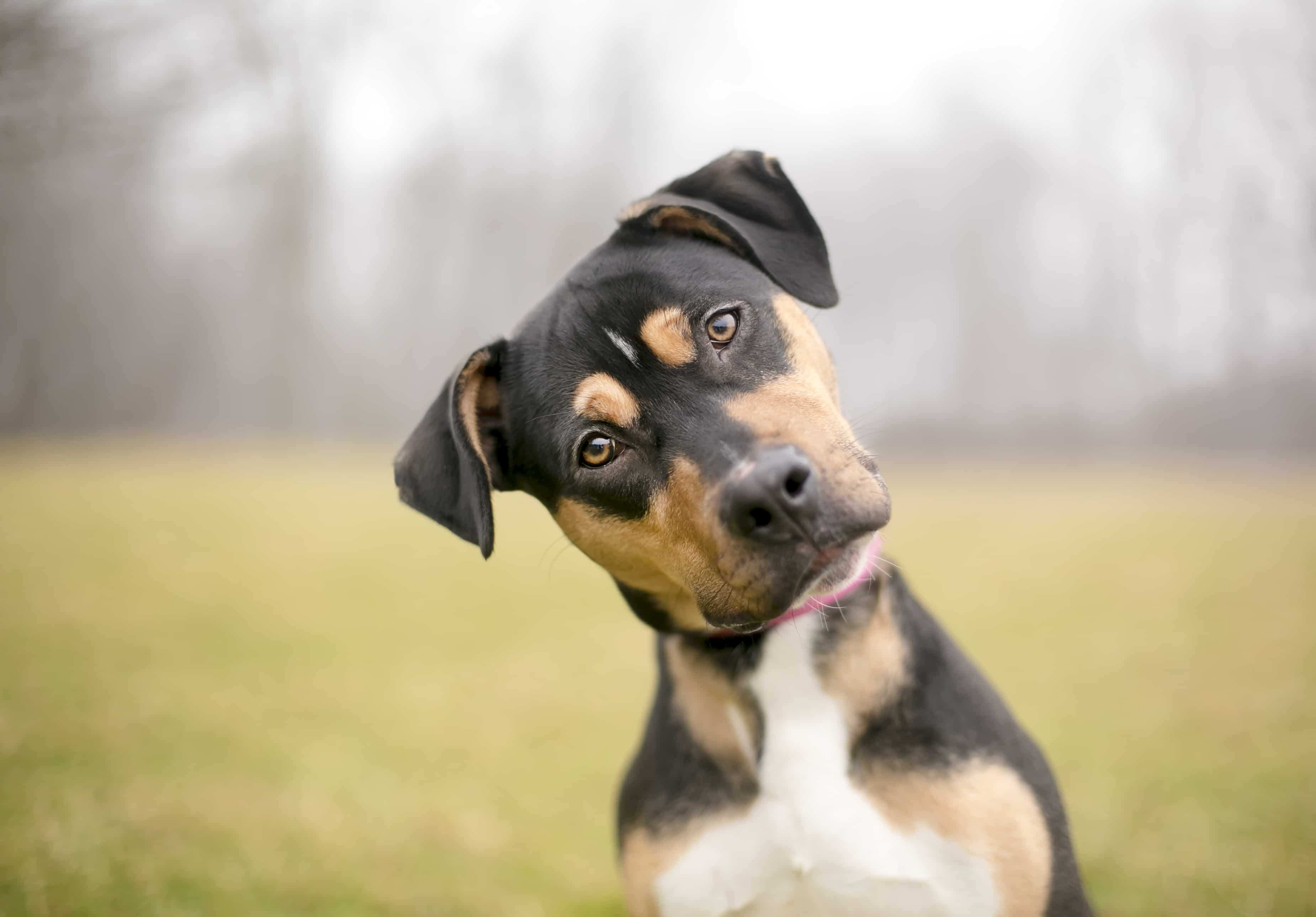 How To Get Your Dog To Listen To You | Dog Won't Listen | Cesar's Way