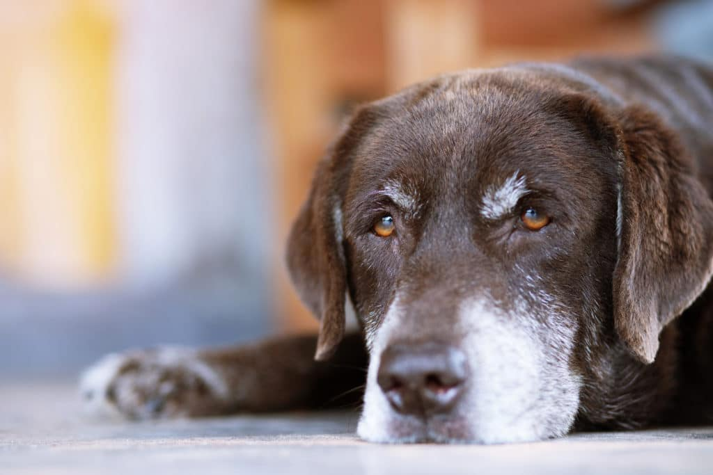 Things You Can Do To Extend Your Dog's Life