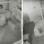 Golden Retrievers Break Into Toddler's Bedroom And Convince Her To Get Them Snacks