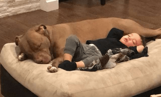 Boy Gets The Flu And Doesn't Want Anyone To Comfort Him Except His Pit Bull