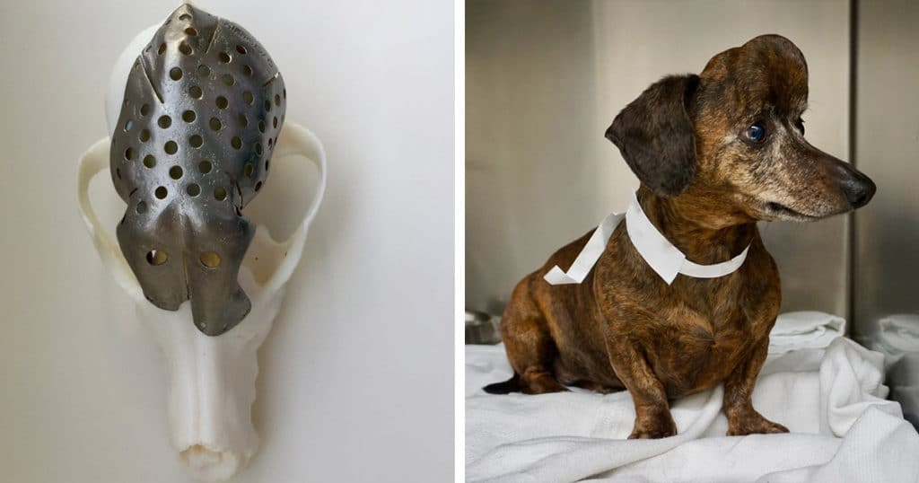 Dog With A Brain Tumor Gets A New 3d Printed Skull