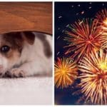 UK To Introduce New Firework Laws To Relieve Anxiety In Dogs