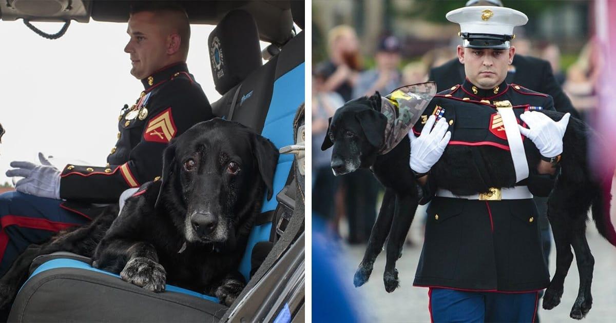 Marine Dog Veteran With Terminal Bone Cancer Gets A Hero's Goodbye