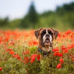 10 Pretty Flowers That Are Deadly To Dogs