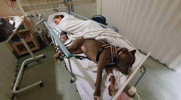 Service Dog Refuses To Leave Mom's Side After Saving Her Life
