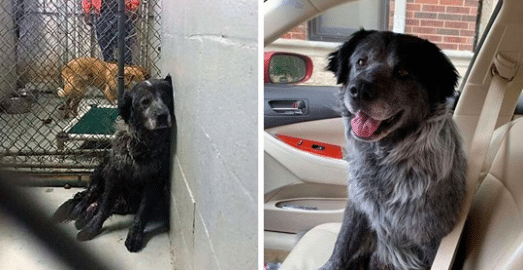 Heartbroken Dog Can't Won't Smiling When He Realizes He's Been Rescued