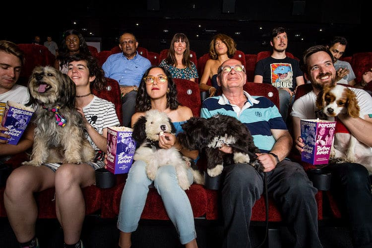 This Movie Theater Lets You Bring Your Dog And Offers Bottomless Wine