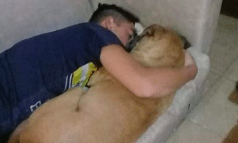 Dog Dies Of Fright In Owner's Arms After Fireworks Triggers A Panic Attack