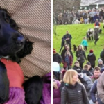 Dying Dog Joined By 400 Other Furry Friends On His Final Walk