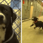 Shelter Dog Realizes He's Being Adopted And Literally Jumps For Joy