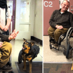 Dog In Wheelchair Gets Adopted By A Man With Similar Paralysis
