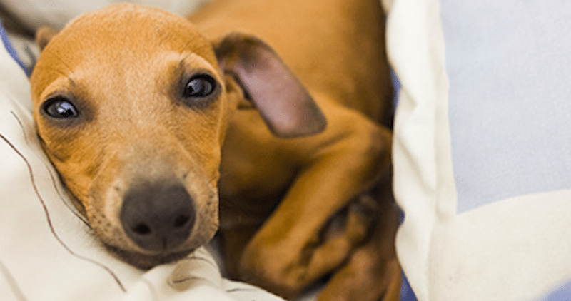 8 Warning Signs Of Cancerous Tumors In Dogs