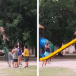 Dog Can't Stop Going Down The Playground Slide Like The Rest Of The Kids