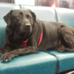 Dog Takes The Bus Herself To Dog Park Every Day To Play