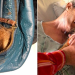 Nurses Sneak Dying Man's Dog Inside Of A Handbag To Say Goodbye At The Hospital