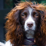 Dog Has Enviable Hair