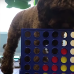 Dog Goes Viral For Beating His Owner In A Game Of Connect 4