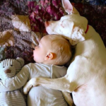 Rescue Dog Used To Be Afraid Of Everybody Until She Met Her New Baby Brother