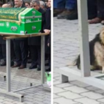 Heartbroken Dog Keeps Coming Back To His Owner's Grave Every Day