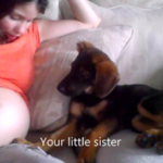 Puppy Approves After Mom Lets Her Know That She Is Going To Be A Big Sister