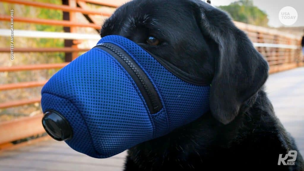 can dogs get the coronavirus