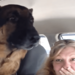 German Shepherd Acts Cool Until He Realizes He's At The Vet's Office