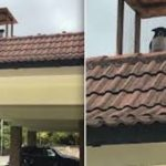 Man Builds A Special Rooftop Lookout Post For His Dog