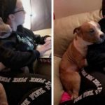 Dog Can't Stop Hugging Woman After She Adopts Him From The Shelter