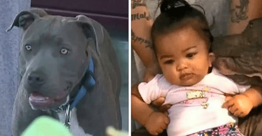 Pit Bull Dragged His 7-Month-Old Sister By Her Diaper Out Of The Family's Burning Home