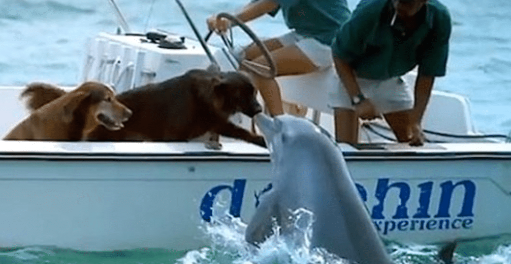 Wild Dolphin Swims Up Close To Give Dog A Kiss