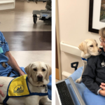 Service Dog Comforts Exhausted ER Doctors And Nurses Fighting Against The Coronavirus