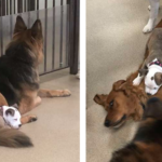 Dog Makes Friends With The Fluffiest Dogs At Day Care So She Can Take A Nap On Them